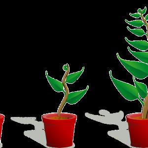 アフィリエイトサイトは育てながら稼ぐという根拠と手法