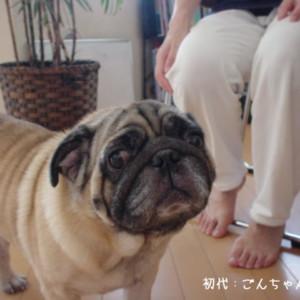 愛犬ゴンちゃん